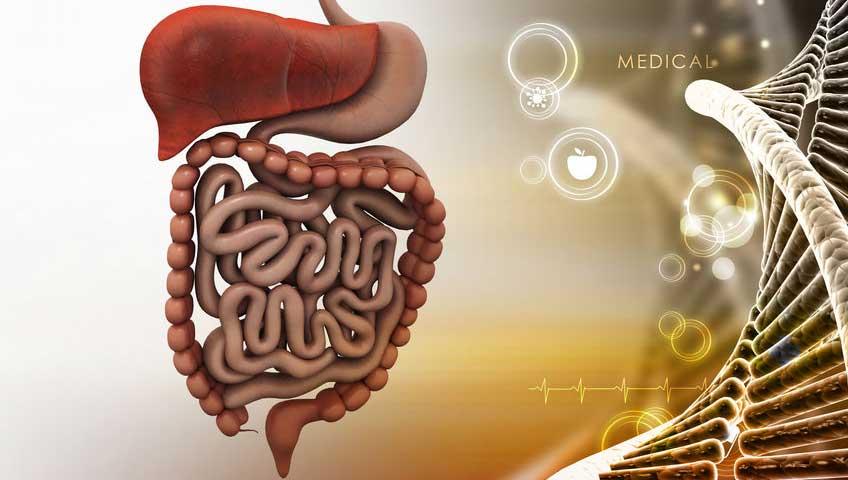 asvab test prep digestive system