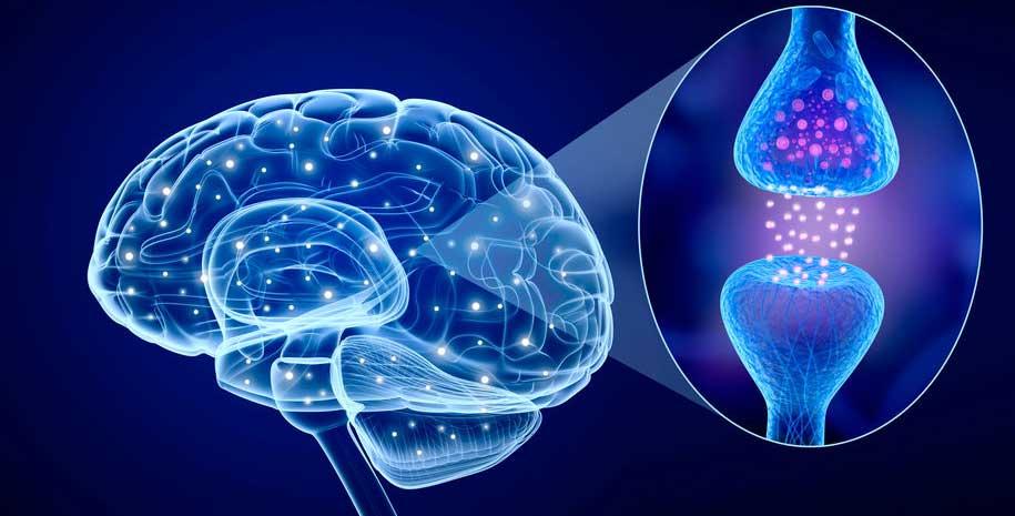 asvab test prep nervous system